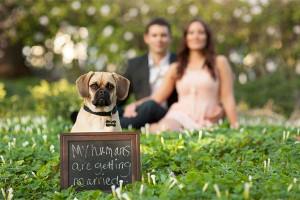 dog-in-engagement-photos - Cópia